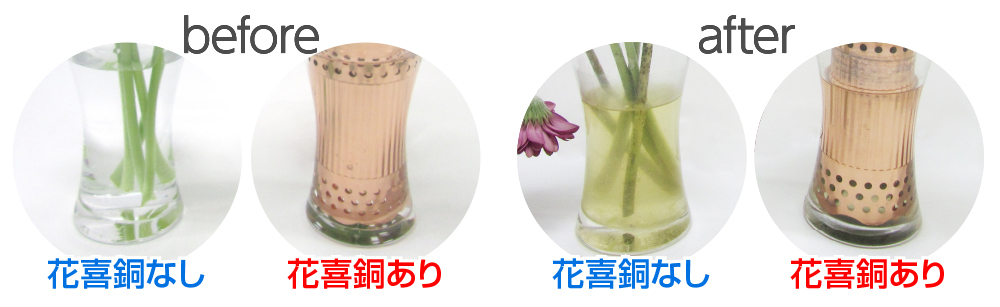 花喜銅ありと花喜銅無しでは16日間で水の様子が違います